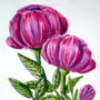 Watercolor Peonies by FactoidFirefly