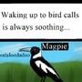Natures alarm clock by guitarfreak696