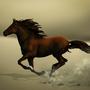 Desert Horse close-up by JoannaChlopek