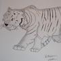Tiger by MuricanSatire