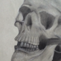 Charcoal Skull Drawing by BrandyBuizel