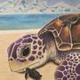 Sea Turtle Family