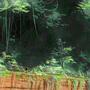 The Top Jungle - 02 - The Pillar's Beast