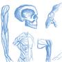 anatomy by Vygavriel