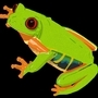 Red Eyed Tree Frog by Anthony-Liberty