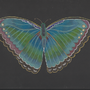 butterfly by Jonesy1970