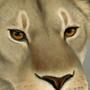 Lion by Ydoj