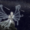Star Fairy