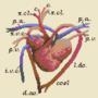 Tortoise Heart by maruki