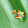 little froggy by AnnasArt