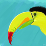 toucans by VipulSodhi