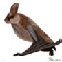 Human/bat -hybrid by Pralinlin