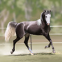 Grey Arabian Horse by Sev4
