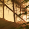 Forest Sommersunset