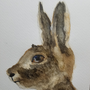 Hare - Watercolor by OVCharlie