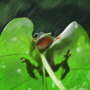 Frog Study by LukeF