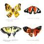 Butterfly by KattyC
