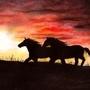 Bloody sunset by kacenace