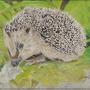 The hedgehog by Jonesy1970