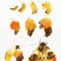 Evolution II. by KattyC