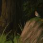 Woodland Practice by MacOFlannigan