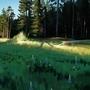 Meadow Study by BaukjeSpirit