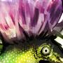 Thistle creature