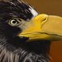 Majestic eagle... I think