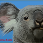 Ubuntu Karmic Koala by Gatsumono