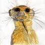 Meerkat by TinyStuffz