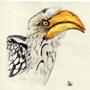 Hornbill by TinyStuffz