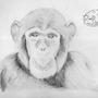 Monkey by Rhay-Tatsuki