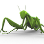 Praying mantis by chocolatechips