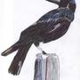 Crow by PsychoCrow