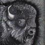 Bo the Buffalo by Little-Eise