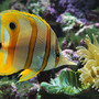 fish by POPCORN2296