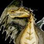 dragon by DelfoxDelfox