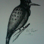 pen and ink bird by TheL1st