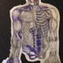 Anatomical Sketch 1 by Rikimaru-Azlar