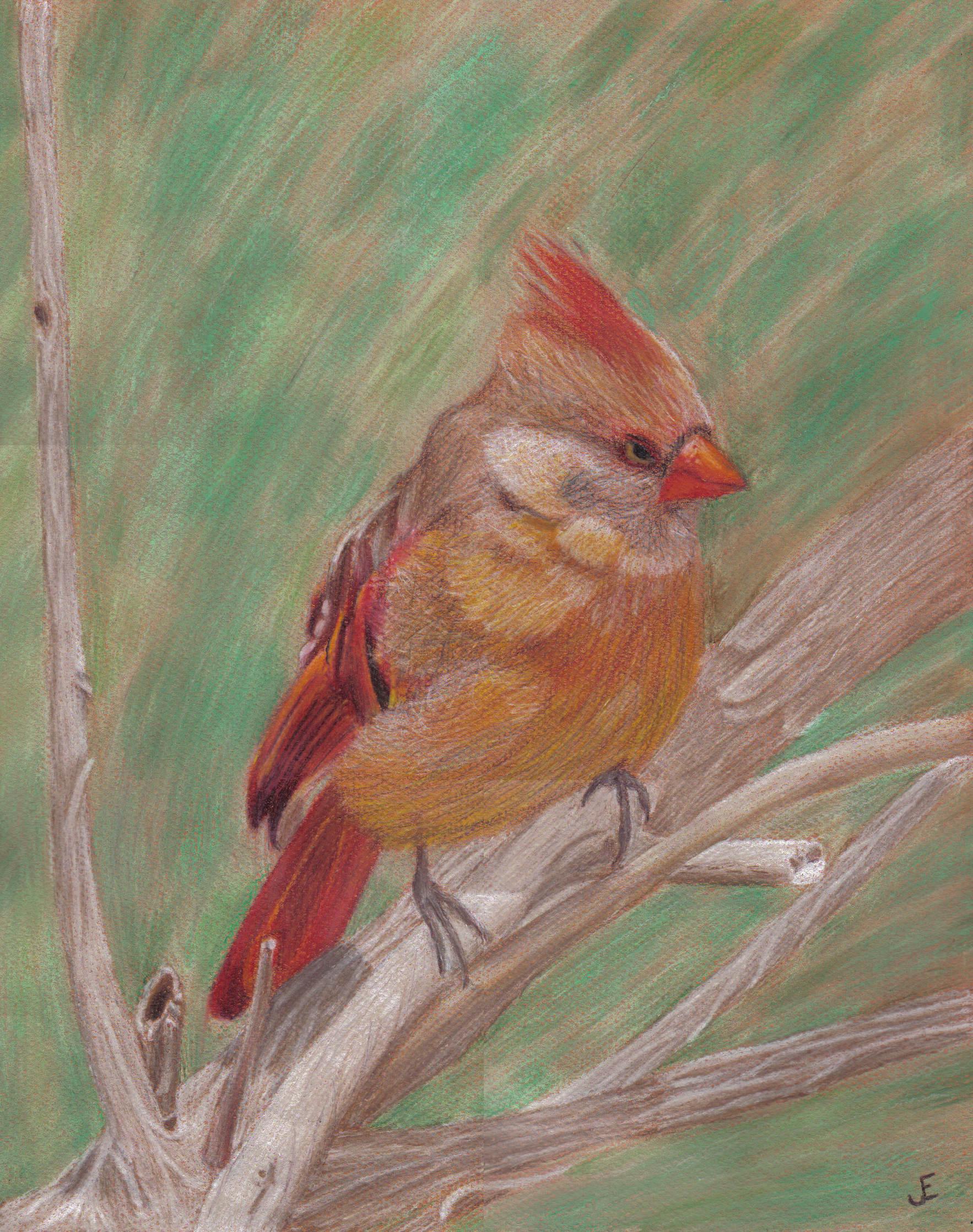 Cardinal in the Brush