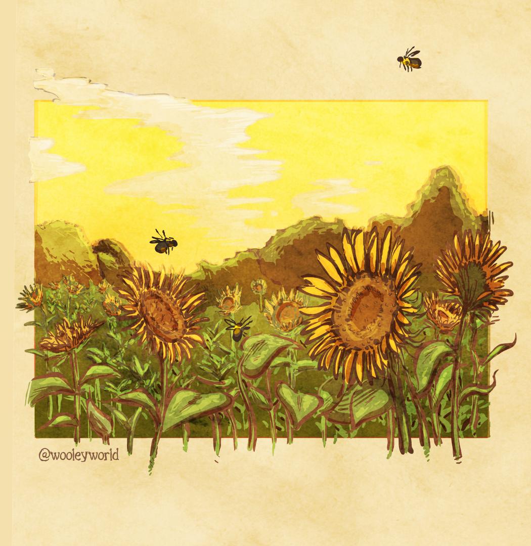 lil sunflowers
