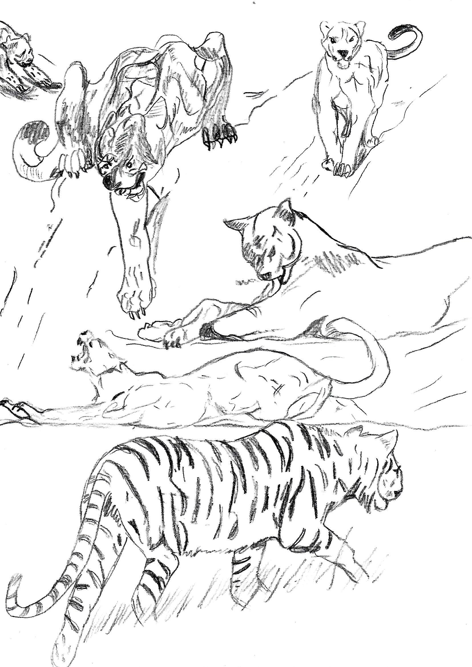 Kugers, Lion and Tiger