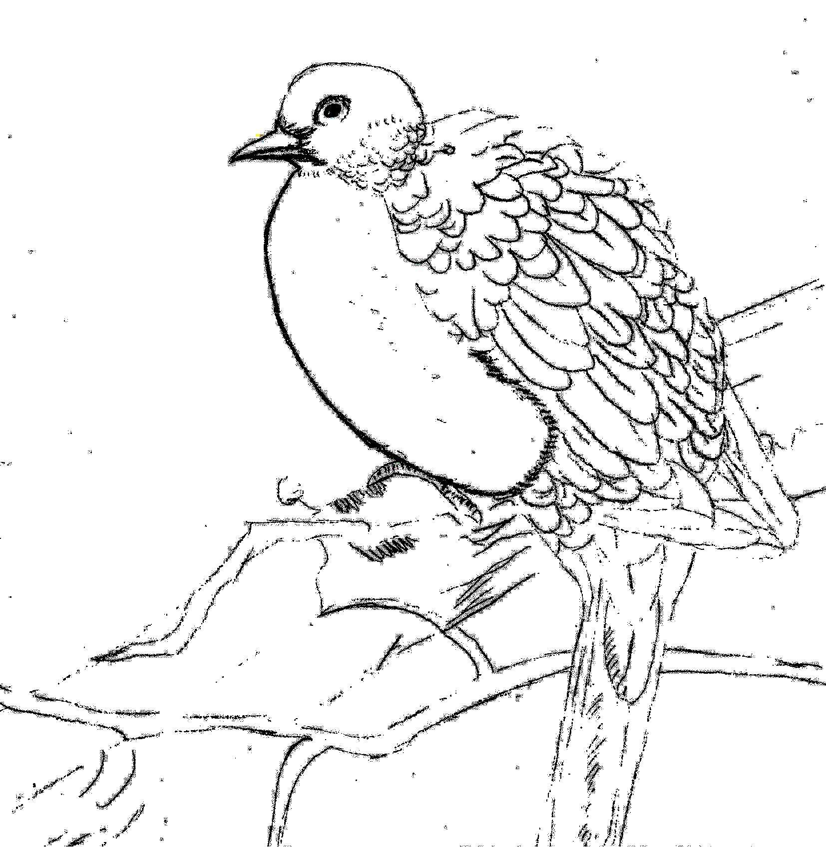 Cute Littel Bird