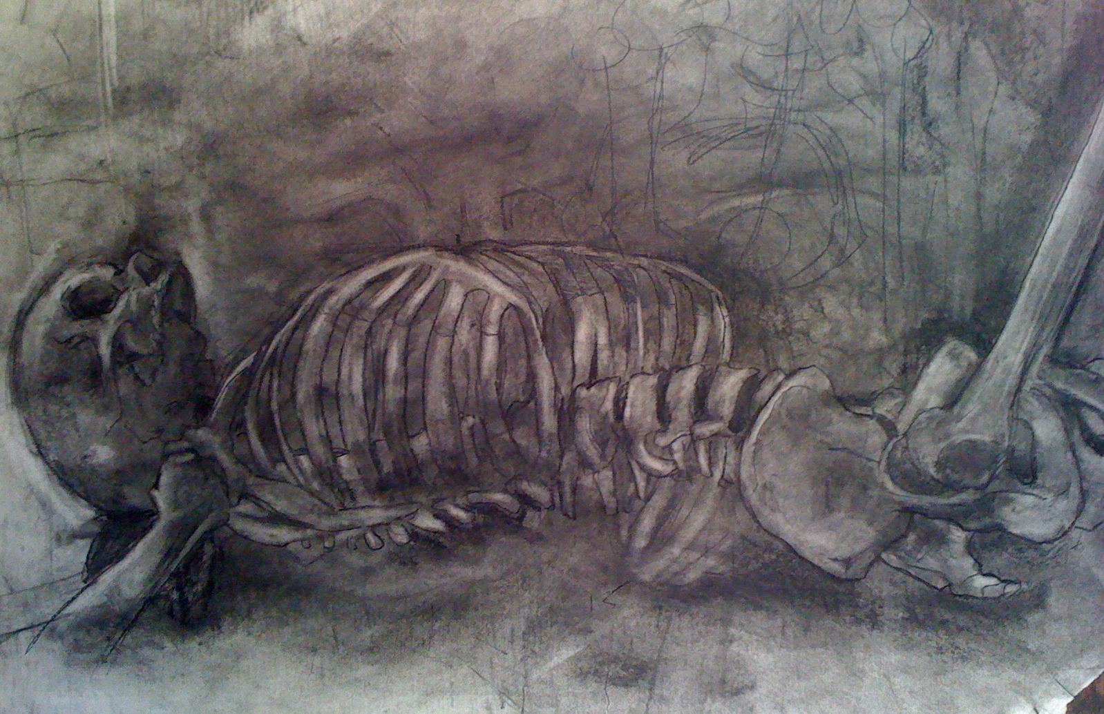 skeletal study