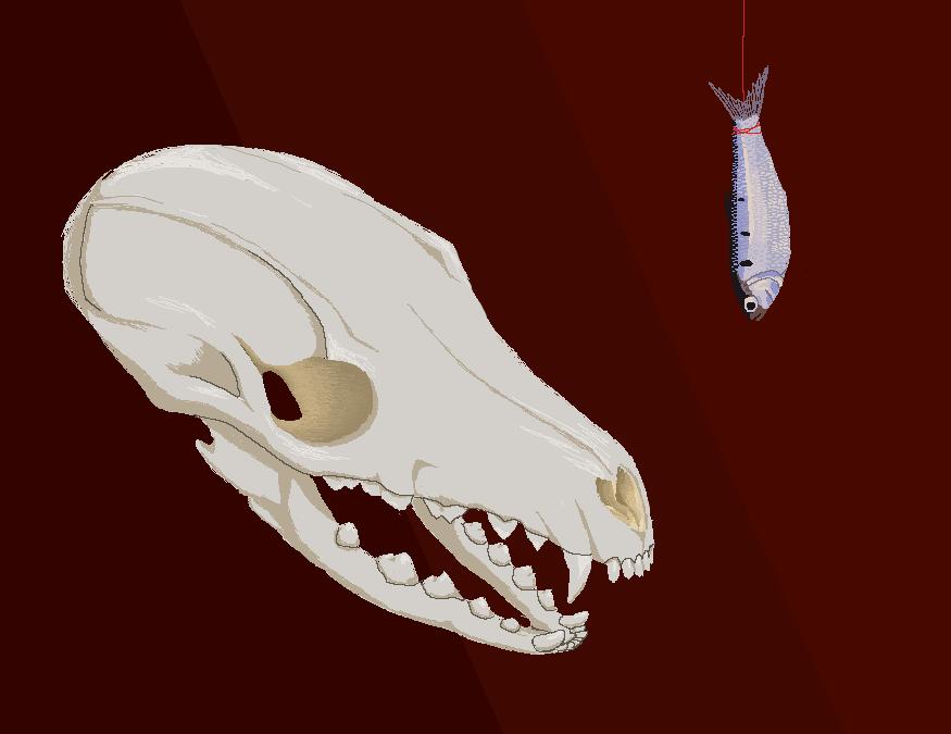 Skull and Shad