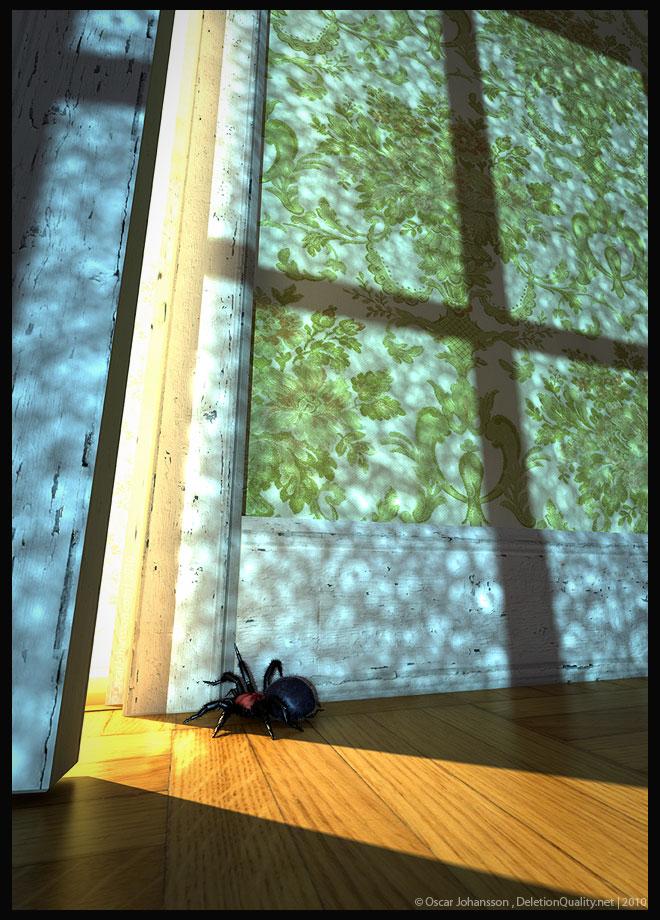 Black Tunnel Web Spider