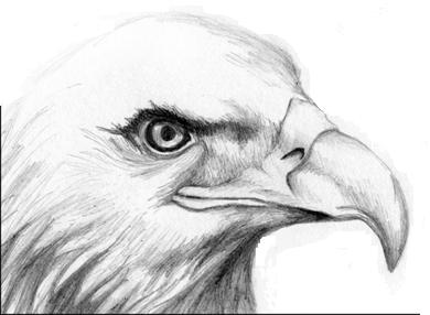 Spying Hawk