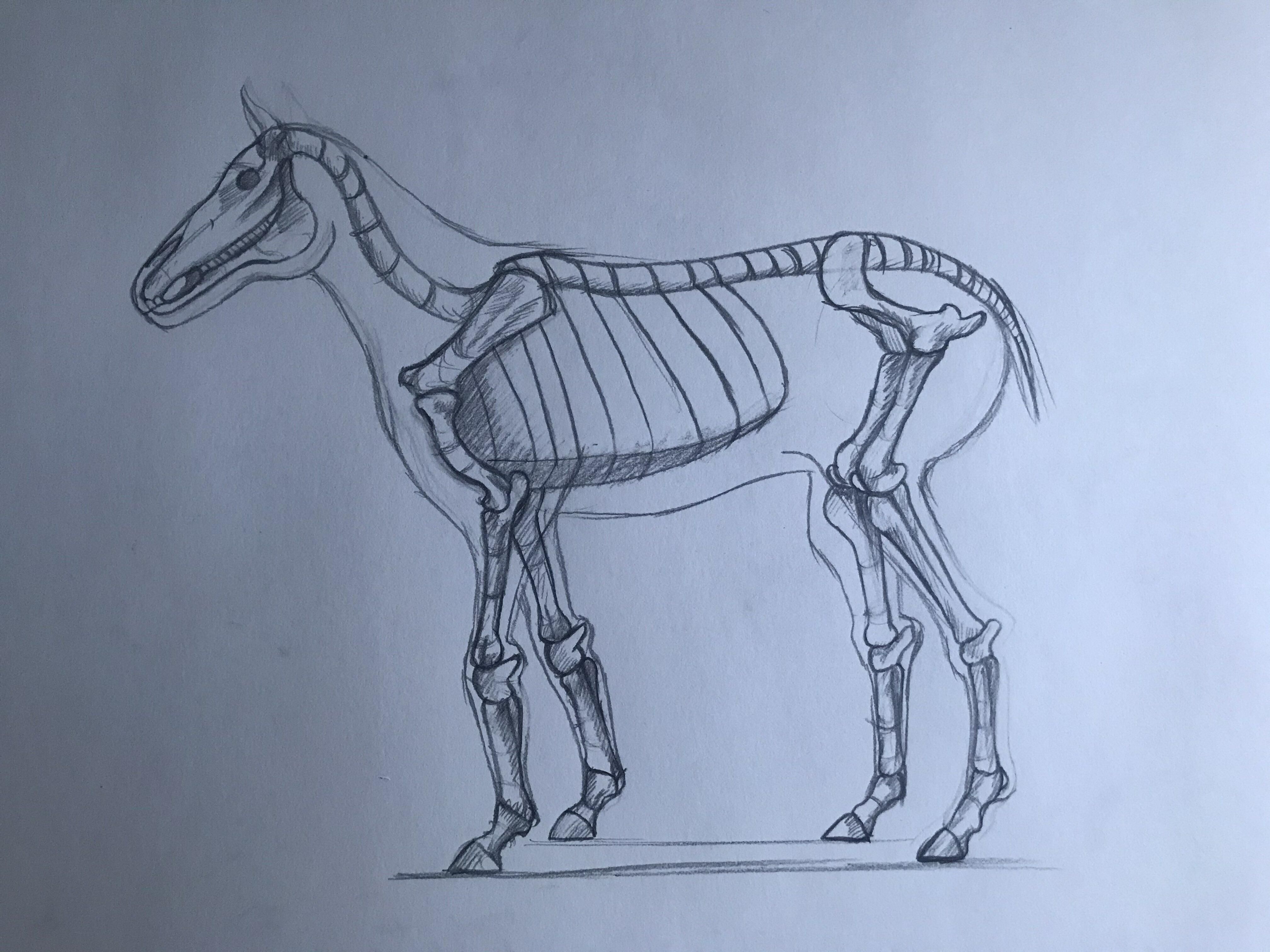 Minecraft Skeleton Horse By Lazyp0tat0 On Newgrounds
