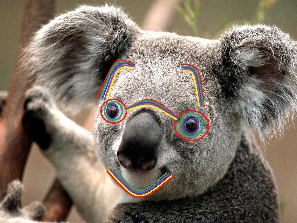 High Koala