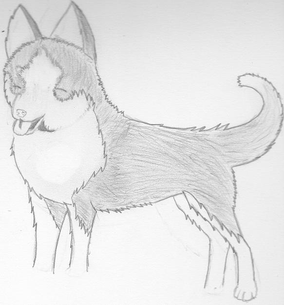 My Old Dog